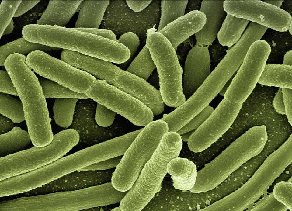 Probiotique Svelte